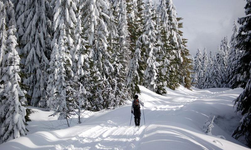 Cross Country Skiing near Mount St. Helens in Washington