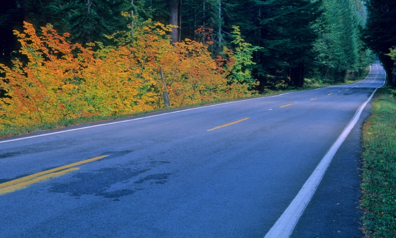 Scenic Drive through Mount Rainier National Park